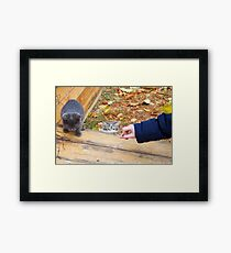 Two homeless kitten playing with a stick Framed Print