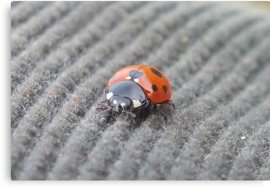 Corduroy Ladybird by Paul Martin