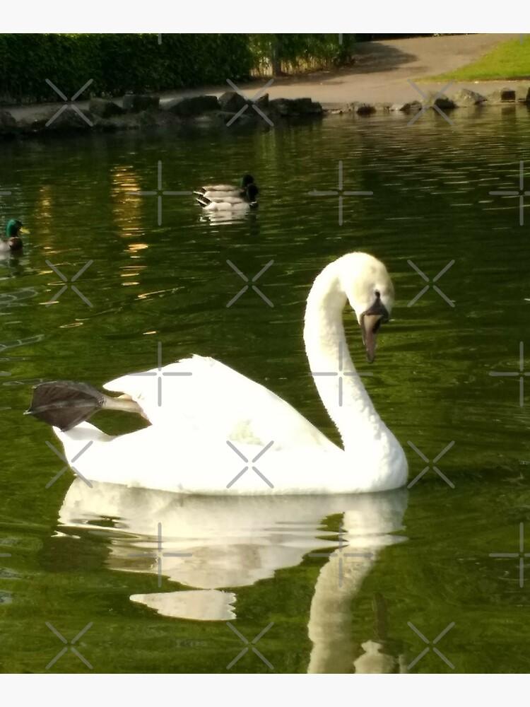 M.I. #62  ☼  Swan - Shot 20 (Pearson Park) by Naean