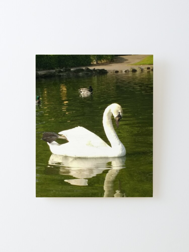Alternate view of M.I. #62  ☼  Swan - Shot 20 (Pearson Park) Mounted Print