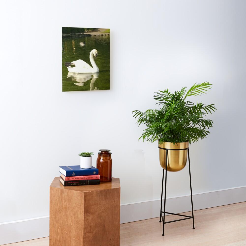 M.I. #62  ☼  Swan - Shot 20 (Pearson Park) Mounted Print