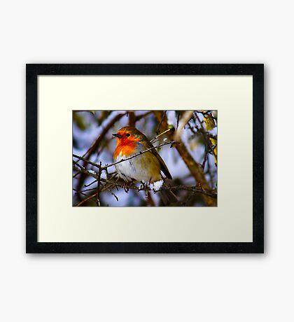 Cheeky Robin 3 Framed Print