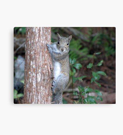 Sweet Squirrel Canvas Print