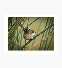 A Little Grassbird Art Print