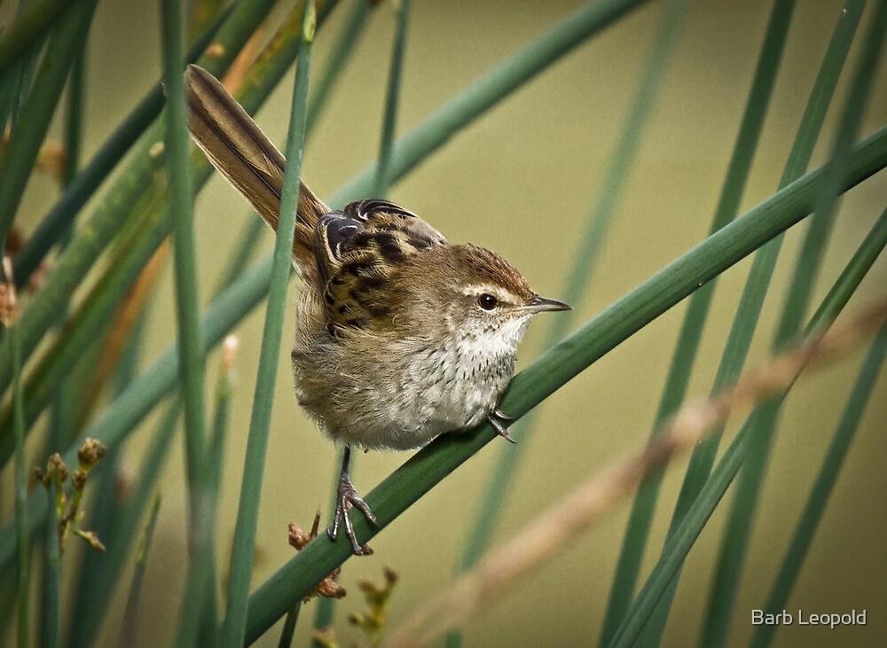 A Little Grassbird by Barb Leopold