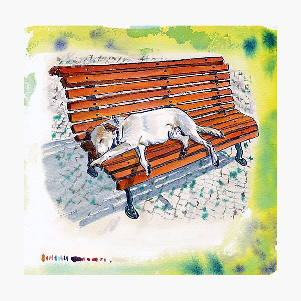 dog on bench Photographic Print