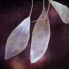 Textured Seed Pods by Astrid Ewing Photography
