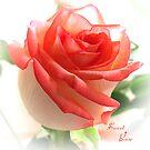 Sweet Rose by Brenda Boisvert