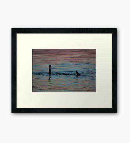 Snorkeling elephants! Framed Print