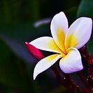 La Fleur by Rick Wollschleger
