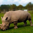 Rhino by cherrytops