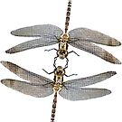 Dragonfly micro photography mirrored  by Followthedon
