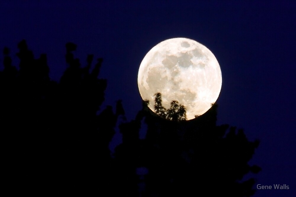 Super Moon Rising Over The Trees by Gene Walls