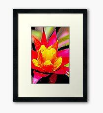 Red Orange Flower 2 Framed Print