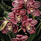 Pink Orchids by Robin Black