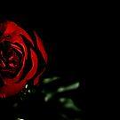 Valentine's Day by Robin Black