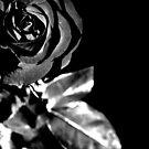 Rose by Robin Black