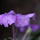 Midnight Purple by Lozzar Flowers & Art