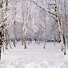 Frozen forest by Ivo Velinov