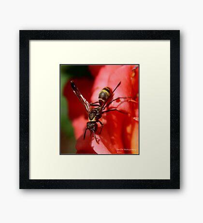 African Wasp! Framed Print