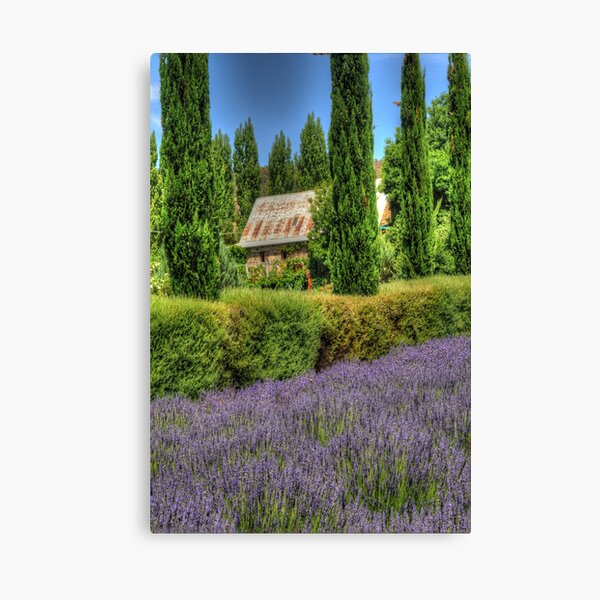 Lavendula, Daylesford, Victoria - The HDR Experience Canvas Print