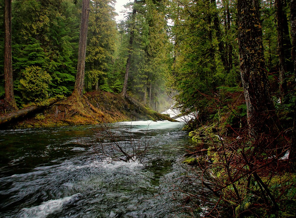 Upper McKenzie River Golw by Charles & Patricia   Harkins ~ Picture Oregon