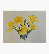 Daffodils           106 Photographic Print