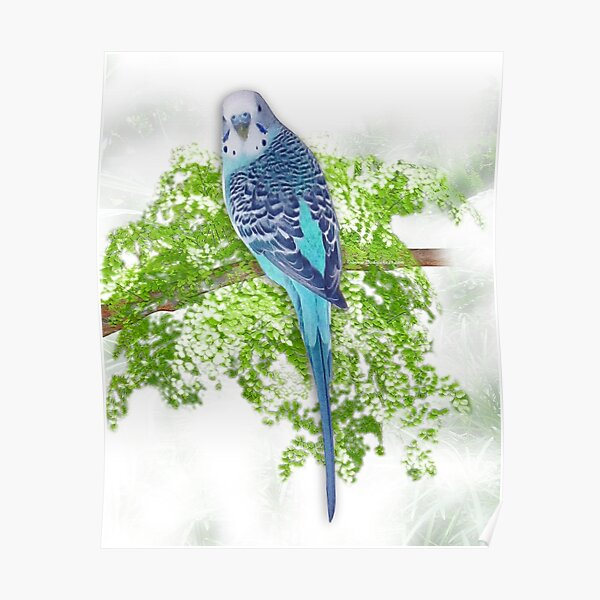 Blue Budgie on Green Poster