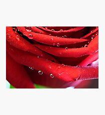Petal Drops Photographic Print