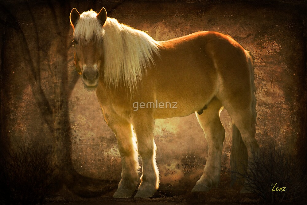 Golden Boy by George Lenz