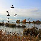 The Ducks Are Safely Home by Brenda Boisvert