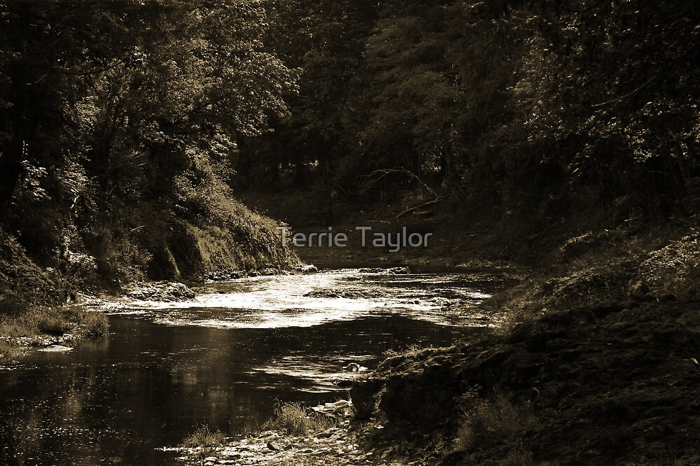 Peaceful Journey by Terrie Taylor