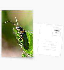 Soldier Beetle. Postcards