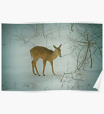 Deer Winter Poster