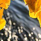 Dreaming autumn by Tamara Travers