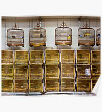 Bird Cages Poster