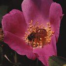 """""""rose"""" by jean-jean"""