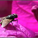 Fly ! by Greg Parfitt