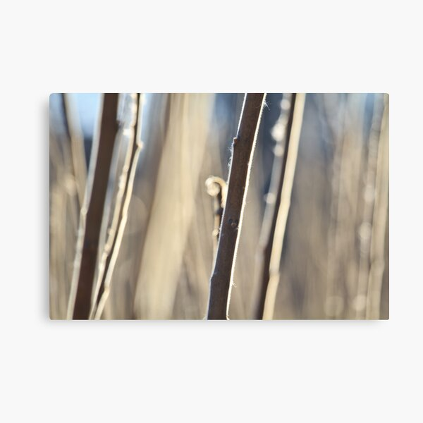 Hairy Canvas Print