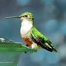 Tiny Backyard Visitor ~ Hummingbird by SummerJade
