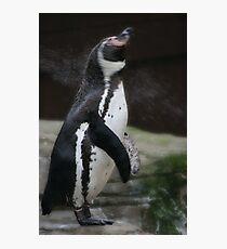 Wet Penguin Photographic Print