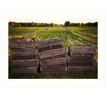 Crates in the Field Art Print