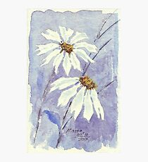 The two little Daisies Photographic Print