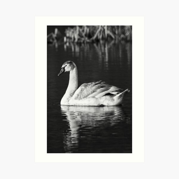 Black and White Reflections Art Print