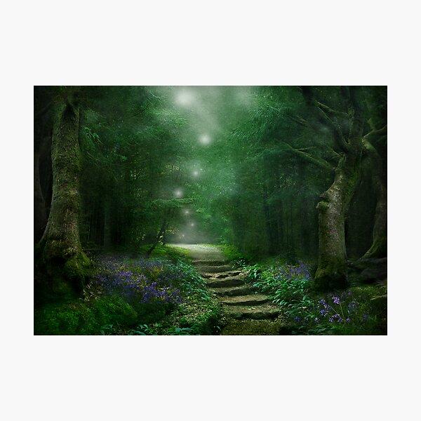 Spirit of the Woods Photographic Print