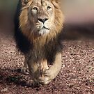 Asiatic Lion by Squealia