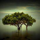 Mangrove Tree by Ian Stevenson