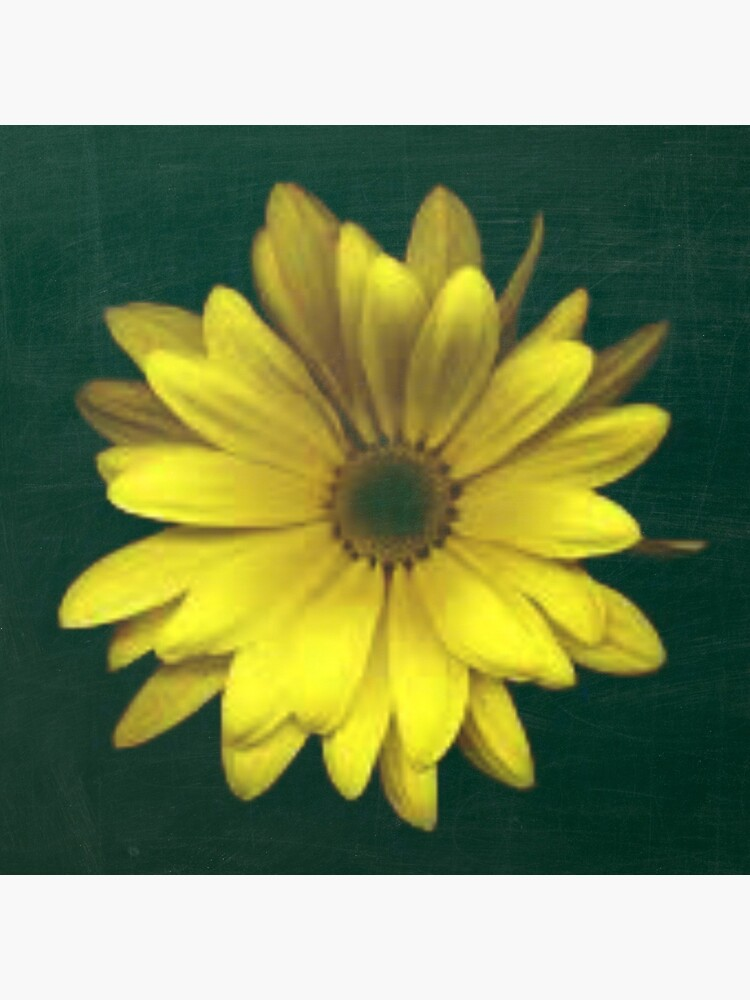 A Bright Yellow Flower by avalonmedia
