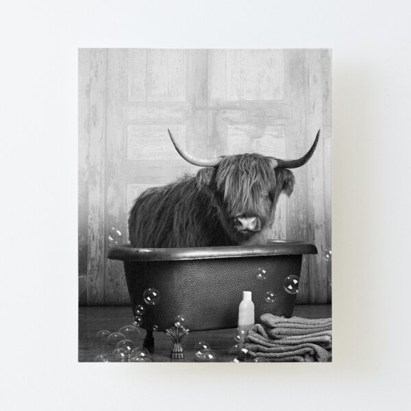 Highland Cow in the Bathtub Canvas Mounted Print
