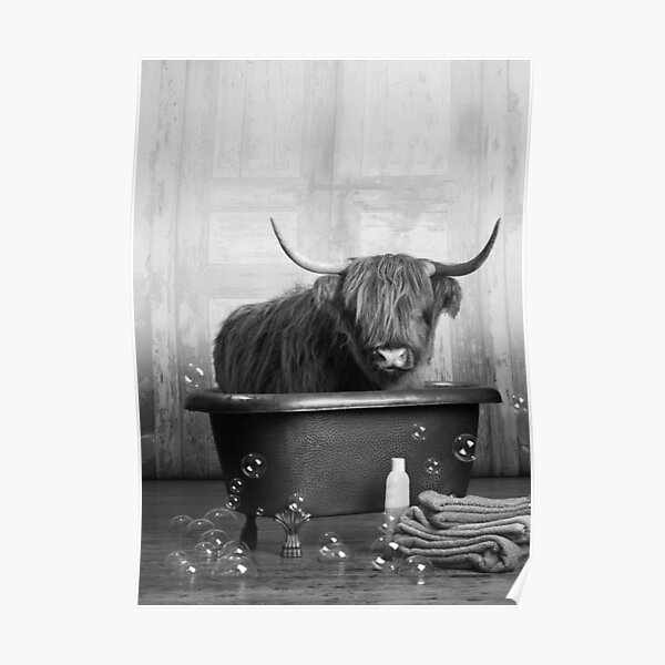 Highland Cow in the Bathtub Poster